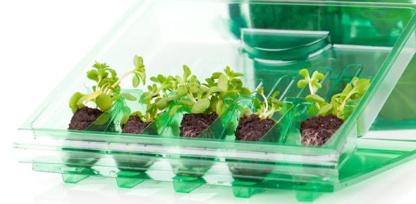 Plant Quizzes Online, Trivia, Questions & Answers - ProProfs Quizzes