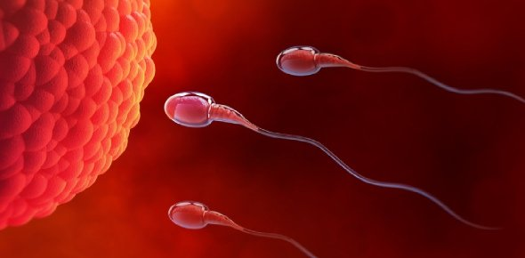 Fertilization Quizzes, Fertilization Trivia, Fertilization Questions
