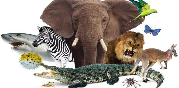 endangered animal Quizzes & Trivia