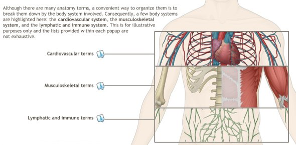Human Anatomy Quizzes Online, Trivia, Questions & Answers