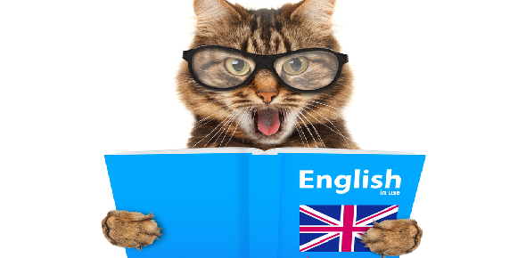 English knowledge Quizzes, English knowledge Trivia, English knowledge Questions