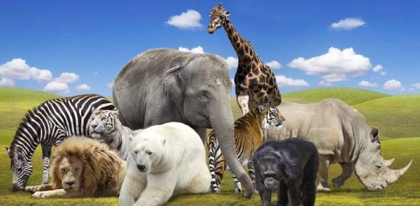 world animal day Quizzes & Trivia