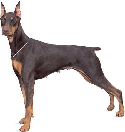Do You Know Your Dog Breeds?