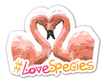 What Kind Of Valentines Animal Are You?