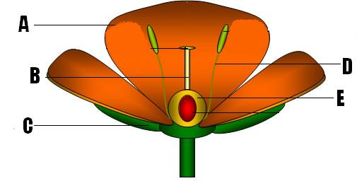 The Structure And Function Of Plants! Trivia Facts Quiz ...
