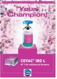 Bnh Gumboro V� C�ch S Dng Vaccine Cevac� Ibd L