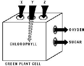 Cells Unit Pre-assessment (Grade 8) Quiz