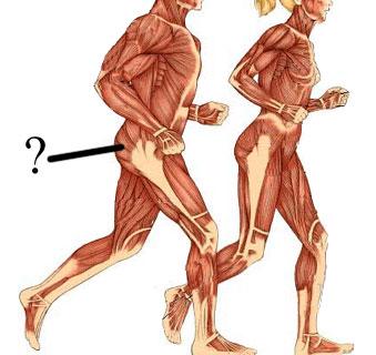 Becky AP (Human Anatomy) Test