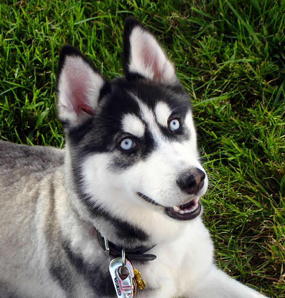 Dog Breed Identification Survey