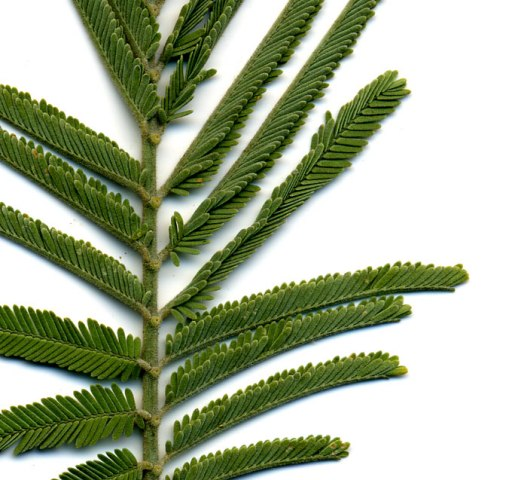 Plant ID Test