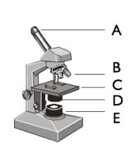 As Level Microscopes Test
