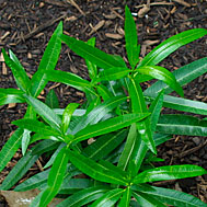 Dangerous Plants: Do You Know What They Are?
