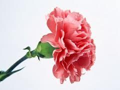 Floral Design Basics Quiz