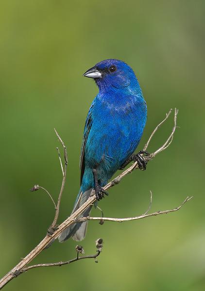 Identify Family Passeriformes Birds