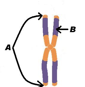 Genetics Test: Can You Identify The Image?