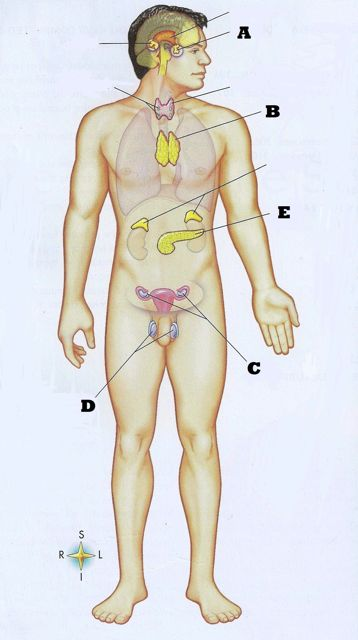 Anatomy & Physiology Final Exam - ProProfs Quiz
