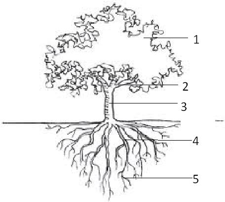 Science Long Quiz 1