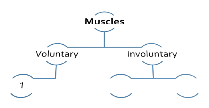 Human Tissue Concept Map.Identify Various Muscle Types Proprofs Quiz