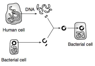 LE HW3 8 Genetic Engineering ProProfs Quiz