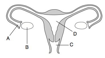 le hw4.4.3 - proprofs quiz label eye diagram quiz