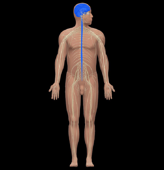 Anatomy And Physiology Lab Quiz 1 - ProProfs Quiz