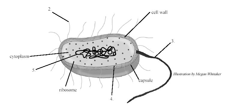 A Quiz On Cell Organelles