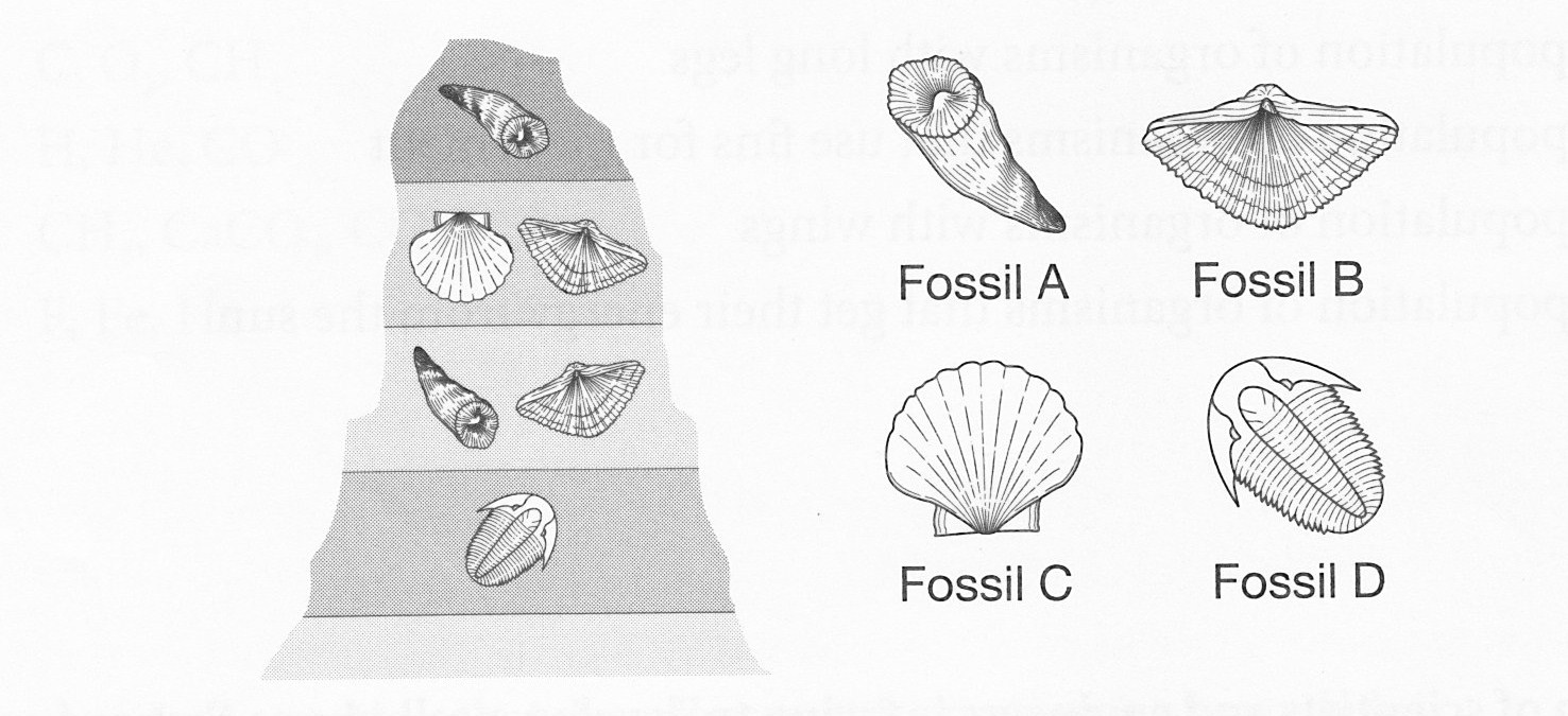 2nd 6 weeks final core assessment proprofs quiz the diagram shows four types of fossils and the rock layers in which they were found fossil a is located nearest earths surface the oldest fossil is most pooptronica