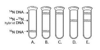 Chapter 16-17 Test - AP Biology - ProProfs Quiz