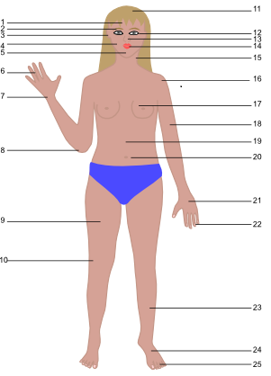 Identify All These Body Parts Body - ProProfs Quiz