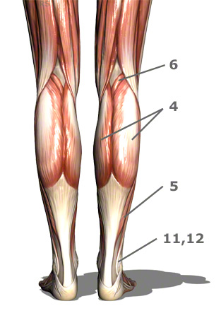 Foot/Ankle/Lower Leg Anatomy Quiz - ProProfs Quiz