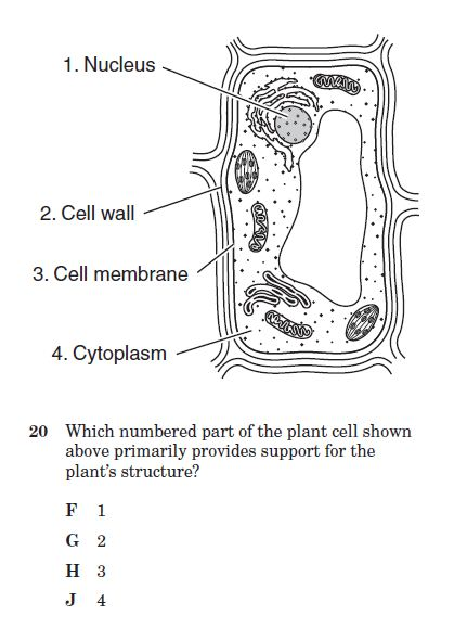 cell structure and function quiz 2 - proprofs quiz diagram of cell organelles test diagram of cell parts #12