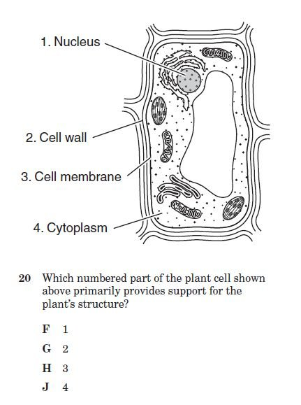 cell structure and function quiz 2 - proprofs quiz diagram of cell organelles test