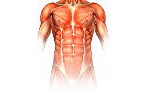 The Structure And Function Of The Muscular System - ProProfs Quiz