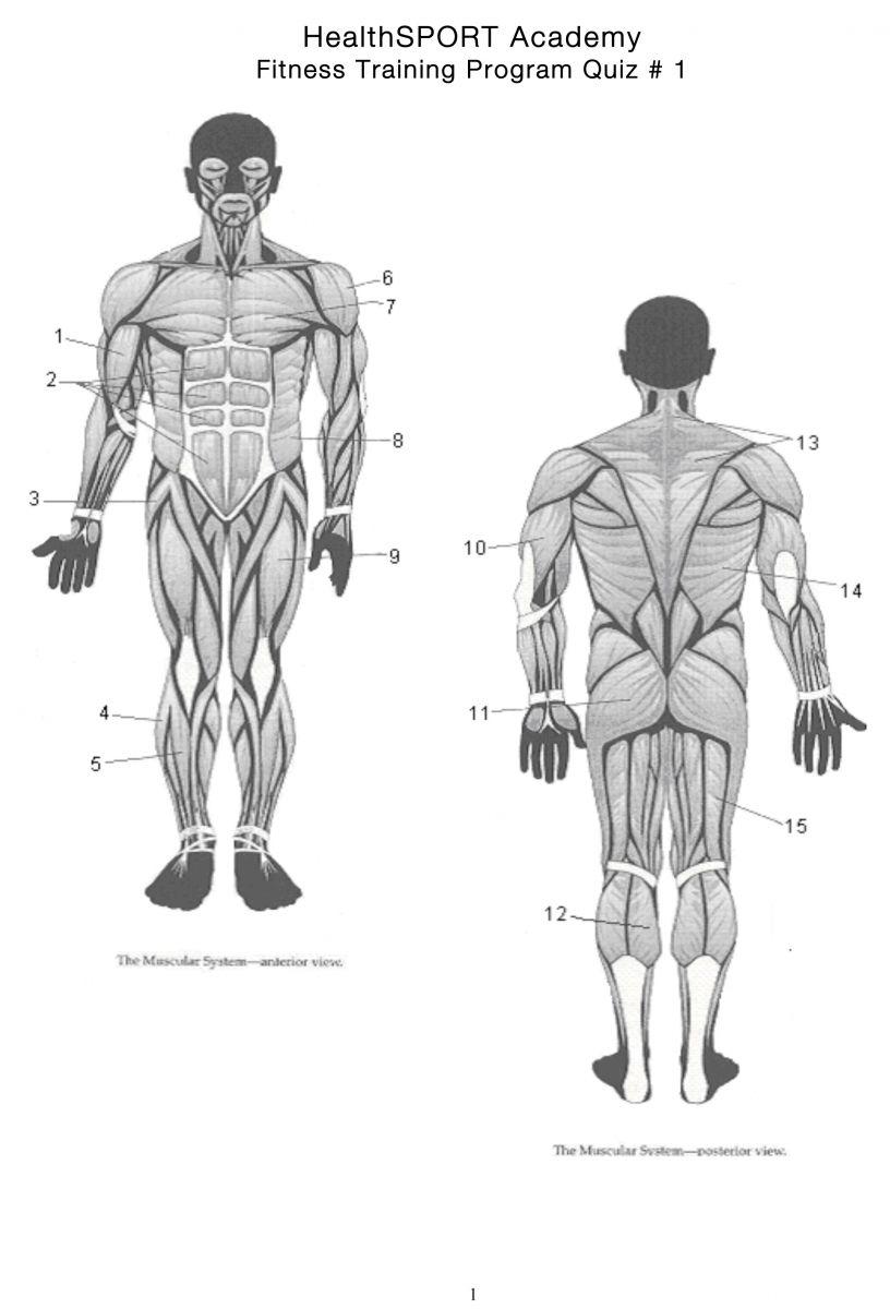 Wunderbar Anatomie Und Physiologie Quiz Marieb Zeitgenössisch ...