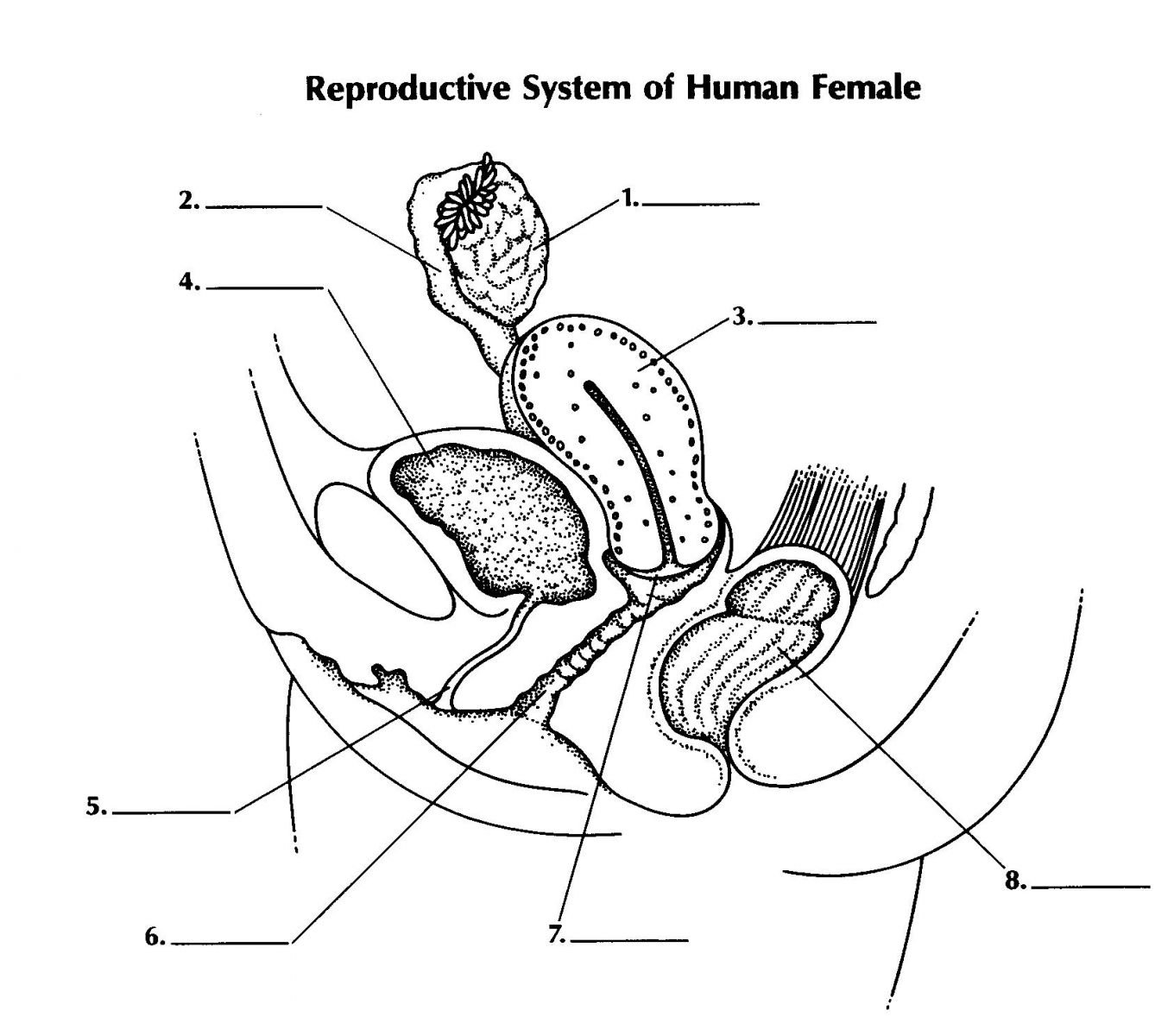 Reproductive System Of Female Proprofs Quiz