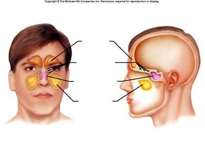Cranium bone quiz proprofs quiz ccuart Gallery