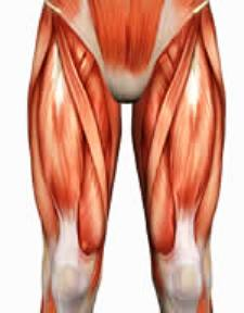 the structure and function of the muscular system - proprofs quiz, Muscles