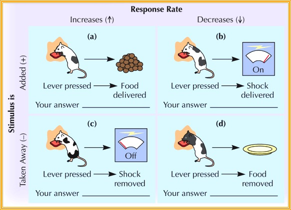 What Is Operant Conditioning Definition and Examples