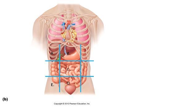 Unit I Language Of Anatomy ProProfs Quiz