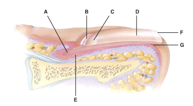 Anatomy and physiology questions the integumentary system anatomy and physiology questions the integumentary system proprofs quiz ccuart Images